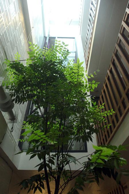 Sua-nha-ong-40m2-thong-thoang-chan-hoa-voi-thien-nhien
