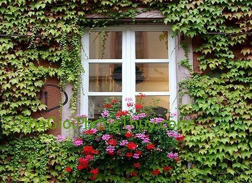 Xây sửa nhà theo phong thủy, cửa sổ dù lớn hay nhỏ luôn là miệng thoát khí hữu hiệu, đồng thời góp phần vào việc kiểm soát tầm nhìn ở trong ra,tạo nơi thư giãn hiệu quả cho gia chủ.